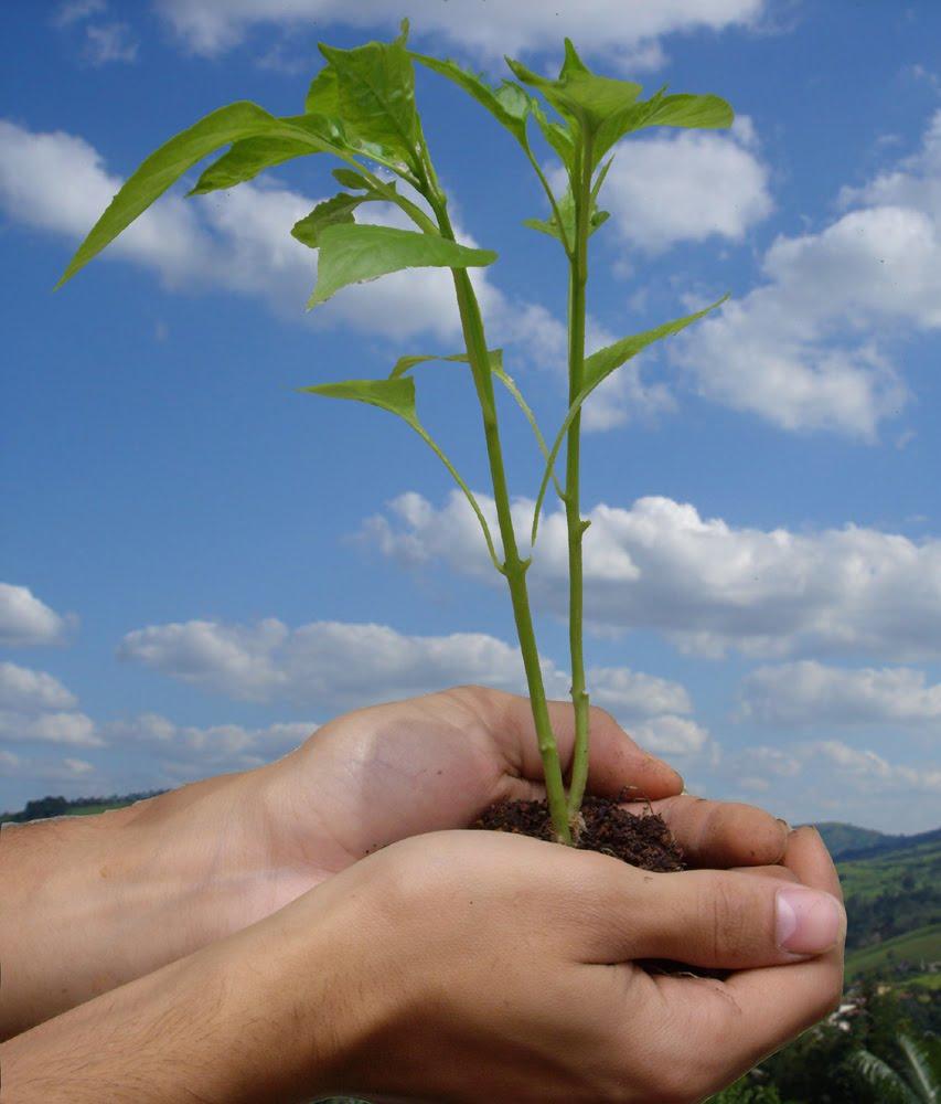 Crise ecológica e conceito de Pessoa
